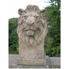 Gondwana Lion