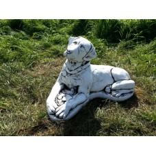 Giant Labradore